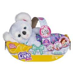 Little Live Pets Cozy Dozy Bear HBB44